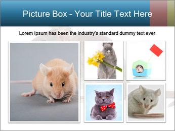 Rat PowerPoint Template - Slide 19