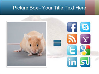 Rat PowerPoint Template - Slide 21