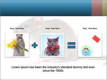 Rat PowerPoint Template - Slide 22