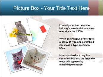 Rat PowerPoint Template - Slide 23
