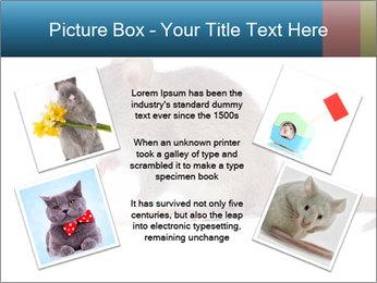 Rat PowerPoint Template - Slide 24