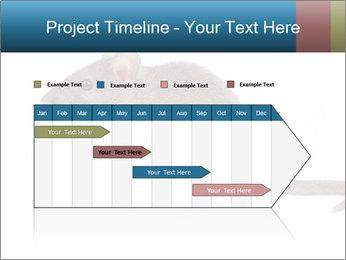 Rat PowerPoint Template - Slide 25