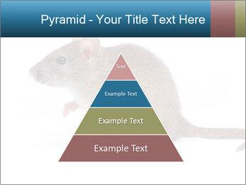 Rat PowerPoint Template - Slide 30