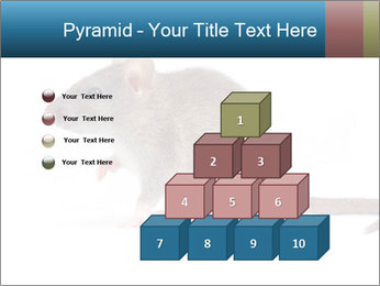 Rat PowerPoint Template - Slide 31