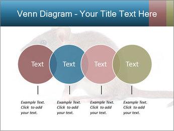 Rat PowerPoint Template - Slide 32