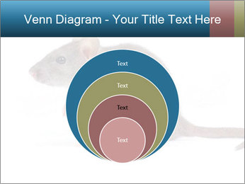 Rat PowerPoint Template - Slide 34