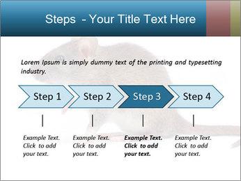 Rat PowerPoint Template - Slide 4