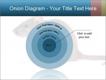 Rat PowerPoint Template - Slide 61