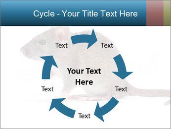 Rat PowerPoint Template - Slide 62