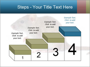 Rat PowerPoint Template - Slide 64
