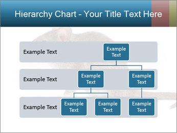 Rat PowerPoint Template - Slide 67