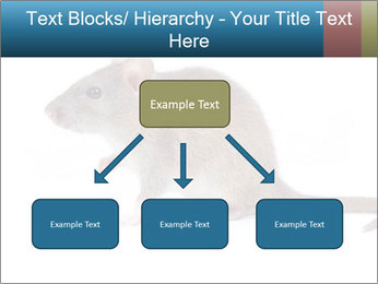 Rat PowerPoint Template - Slide 69