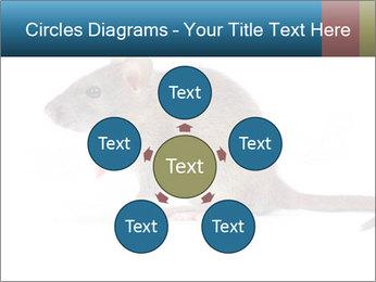 Rat PowerPoint Template - Slide 78