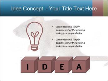 Rat PowerPoint Template - Slide 80