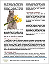 0000096734 Word Template - Page 4