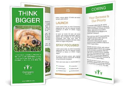 0000096755 Brochure Template
