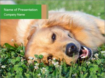 0000096755 PowerPoint Template - Slide 1