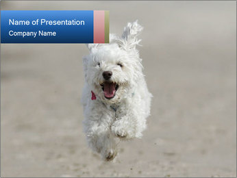 0000096757 PowerPoint Template - Slide 1