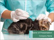 Little kitten PowerPoint Template