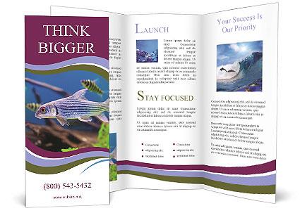 0000098046 Brochure Template