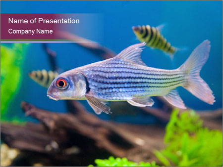 Colorful fish PowerPoint Template