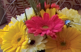 The Bristol bouquet of Gerbera daisies
