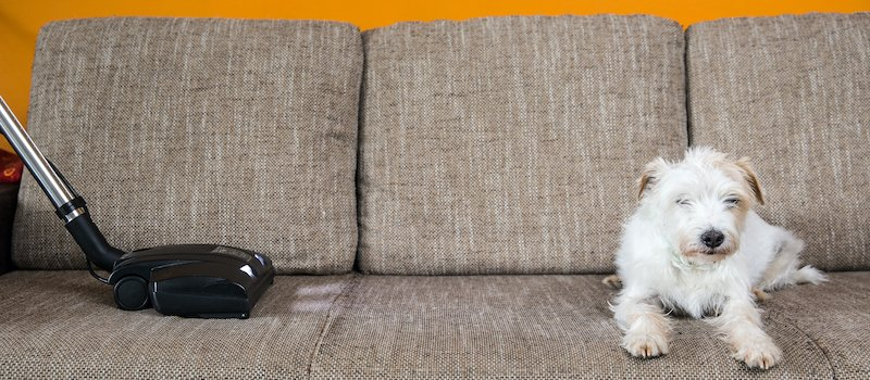 Vacuum on couch next to dog