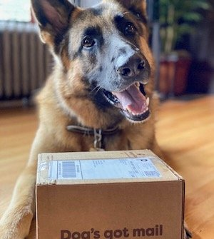 Happy dog opens their Hungry Bark mail
