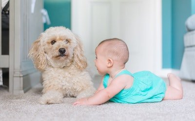 Baby and dog on carpeted floor
