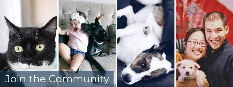 """Four frames of pets and pet owners with caption """"Join the Community"""""""