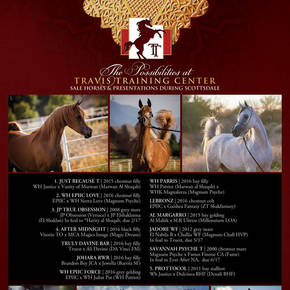 Sale Horses & Presentations at Scottsdale