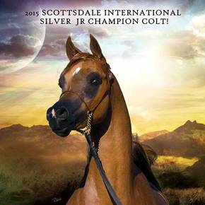 2015 Scottsdale International Silver Jr Champion Colt!