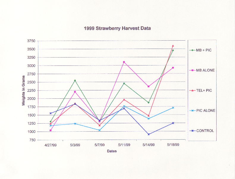 1999 Strawberry Harvest Data, Treatments, and Yield Data Sheets