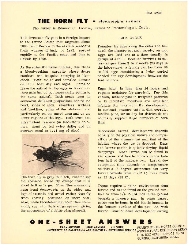 The Horn Fly-Haematobia irritans