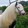 horsegirl126