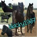 blacky1907