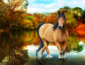myhorses