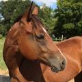 loveisinthehouse