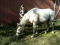 ponygirlak