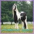hawaiian gypsy