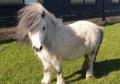 paradise's ponies