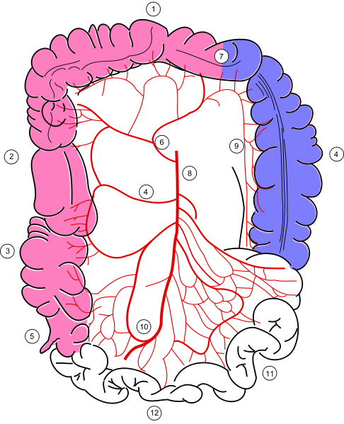 Colonic blood supply.png