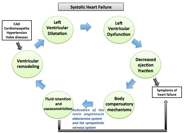 Congestive heart failure pathophysiology - wikidoc
