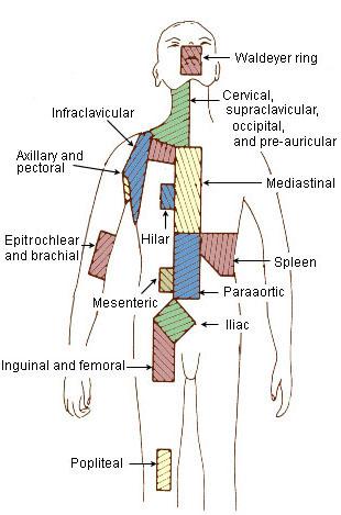 Celiac Body Region