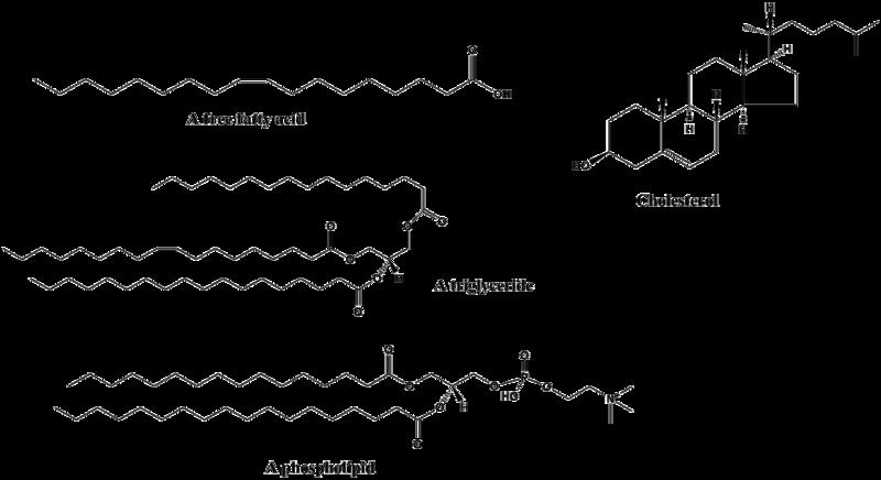 Lipid Diagram