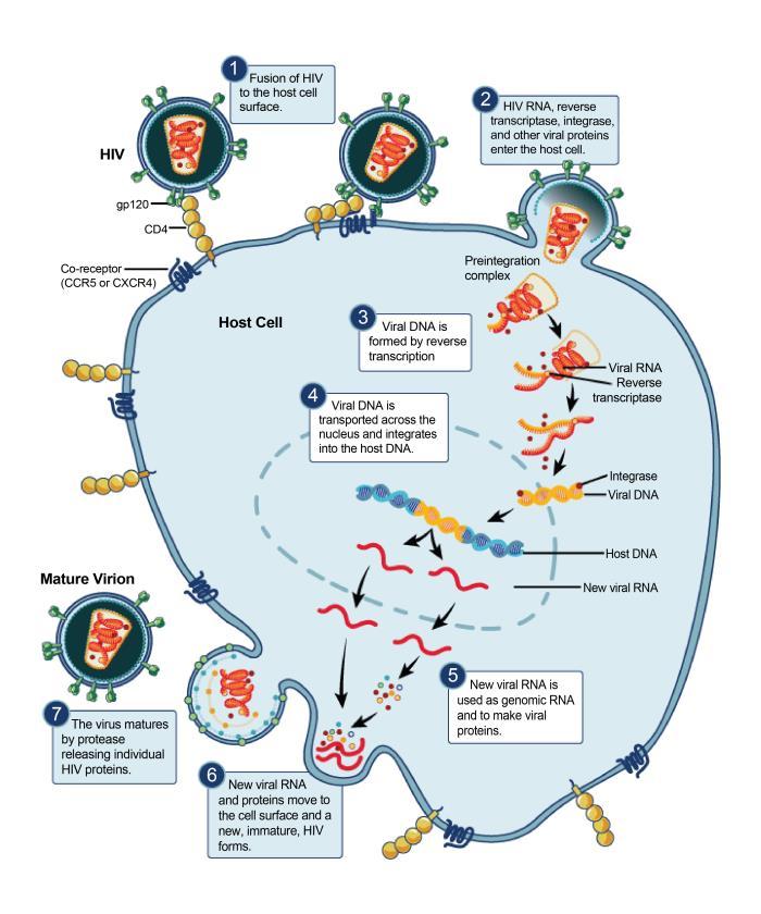 Viral Infection Link To Sjogren S Syndrome: HIV AIDS Pathophysiology