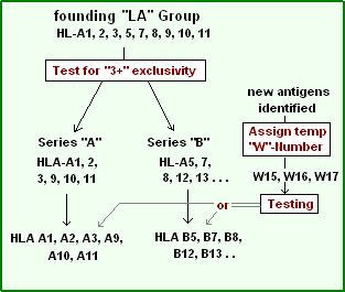 HL-Series A and B.PNG