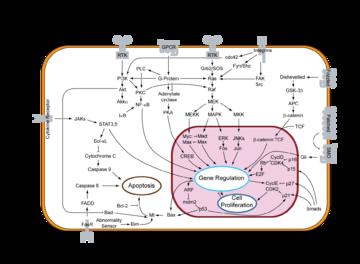 Signal transduction - wikidoc on gene drawing, gene testing, gene editing, gene concept map, gene technology, gene science, gene biology, gene identification, gene cloning, gene linkage,