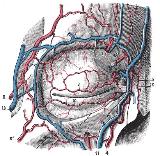 maxillary artery plan of branches of internal maxillary arterySuperficial Temporal Artery Angiogram