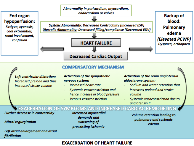 The compensatory mechanisms in heart failure.